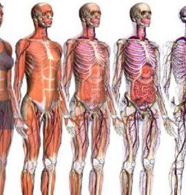 Corso di Fisiologia ed Anatomia Umana